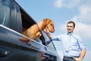 Die Hundebox fürs Auto ist wichtig, da Sie sonst ein Bußgeld zahlen müssten