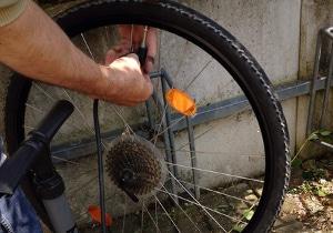 Drehmomentschlüssel beim Fahrrad nutzen: Eine Empfehlung kann beispielsweise ein Fachmann aussprechen.
