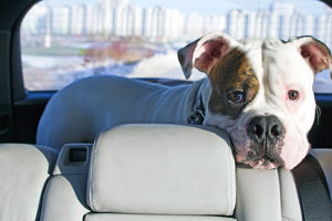 Im Lederpflge-Test sind auch Pflegemittel für Automobilleder vertreten.