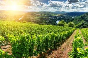 Bei einem Refraktometer-Test im Weinbau ist Präzision gefragt.