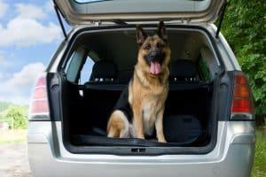 Mit einer Hunderampe aus dem Test kommt ihr Liebling leichter in den Kofferraum.