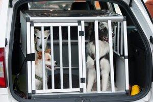 In einem Hunderampen-Test erfahren Sie, welches Modell sich für Ihren Vierbeiner eignet.
