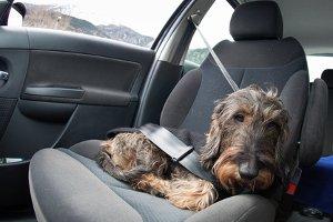 Innenraumreiniger für das Auto aus dem Test lassen sich auch für Polstermöbel verwenden.