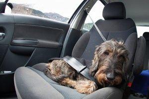 Ein selbst durchgeführter Autositzbezüge-Test sollte stattfinden, bevor Sie sich für ein Modell entscheiden.