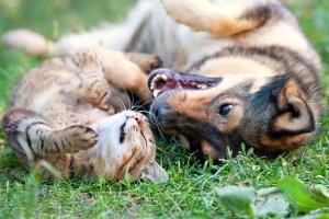 Es gibt viele GPS-Tracker für Hunde. Ein Test kann Ihnen dabei helfen das richtige Modell zu finden.