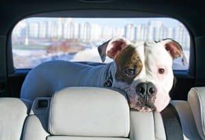 Handdampfreiniger: Einen Test sollten vor allem auch Haustierbesitzer wagen.