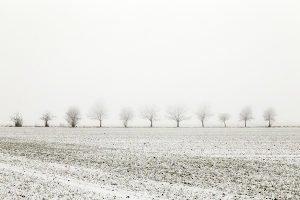 Wenn Winter-Reithandschuhe den Test bestanden haben, steht einem Ritt durch die Schneelandschaft nichts mehr im Wege.