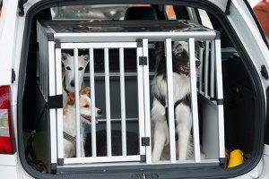 Ein Hundegitter fürs Auto zu kaufen, kann die Sicherheit Ihres Tieres beim Autofahren erhöhen.