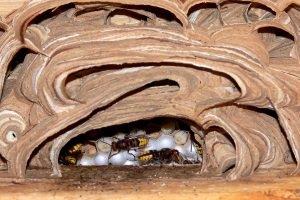 Wie finden Sie die beste Wespenfalle?