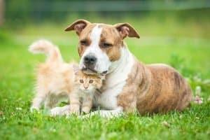 Eine Zeckenzange mit Schlinge ist am besten für Ihr Haustier geeignet