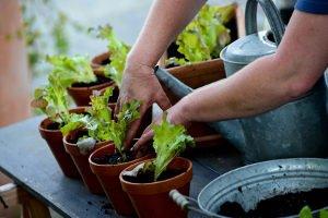 Soll Ihre Gießkanne für innen oder im Garten genutzt werden?