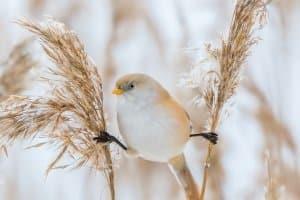 Ein gutes Vogelhaus lockt Vögel aller Art an.