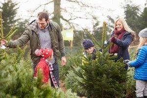Mittels eigenem Snowboard-Test können Sie Boards für die ganze Familie als Weihnachtsgeschenk finden.