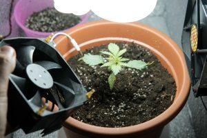 Die beste Growbox ist optimal auf die Bedürfnisse der Pflanzen, die in ihr aufgezogen werden sollen, abgestimmt.