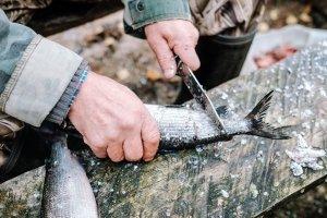 Bestes Handling: Ein Survival-Kit kann vielseitig eingesetzt werden - z. B. fürs Entschuppen selbst gefangener Fische.