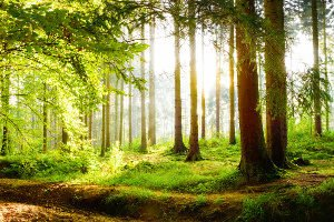 Wenn Sie einen Nistkasten aus Holz kaufen, sollten Sie diesen nicht in die pralle Sonne hängen.