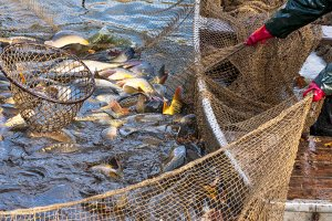 Die besten Fischfinder kombinieren hohe und niedrige Frequenzen – der Fischfinder kann so auch die Beschaffenheit des Grundes gut abbilden.