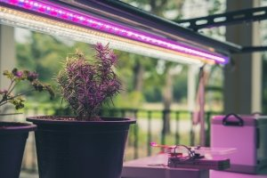 Eine Pflanzenlampe erfüllt im Vergleich zu herkömmlichen Lampen spezielle Voraussetzungen. Eine Besonderheit ist das Farbspektrum.