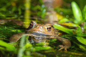 Stehpaddeln ist auch Naturerfahrung. Daher sollte das SUP-Paddel im eigenen Testbericht eine gute Figur machen, damit die Freude lang erhalten bleibt.