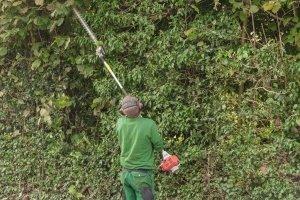 In Ihrem Garten fallen große Mengen an Holzschnitt an? Dann fragen Sie beim Fachhändler nach einem leistungsstarken Benzin-Häcksler für Ihren Test.