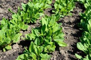 Überlegen Sie sich vor Ihrem Gartenharke-Test, wo diese eingesetzt werden soll. Für Zwischenräume im Beet eignen sich Handharken.