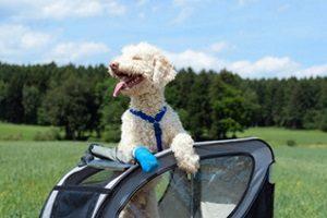 Ein gutes Hundgeschirr sollte im Test zuhause den Hund weder rutschen noch einengen.