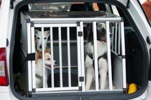 Statt dem Hundegeschirr kann zum Test auch das Auto mit einer Box ausgestattet werden.