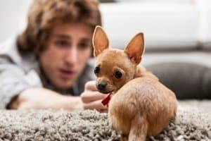 Das Hundegeschirr für einen Welpen sollte bei Test-Anprobe besonders gut sitzen, ansonsten könnten Wachstumsschäden entstehen.