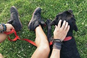 Welche Hundeleinen den eigenen Test bestehen, ist hauptsächlich von Hund und Mensch abhängig.