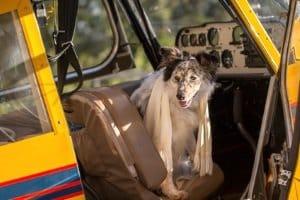 Nicht zu verwechseln ist der Hundetragerucksack für den Test am Boden mit Flugboxen. Diese müssen bestimmte Abmessungen einhalten.