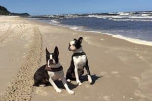 Welches Modell persönlicher Testsieger in Sachen Hundegeschirr wird, hängt auch von den Vorlieben der Vierbeiner ab.
