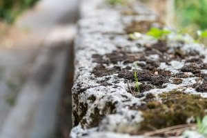 Bester Moosvernichter? Im Rasen eignen sich andere Produkte als auf Steinen, wo auch Flechten und Grünbelag bekämpft werden müssen.