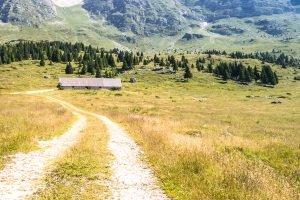 Gute Nordic-Walking-Stöcke unterstützen sowohl auf dem Asphalt als auch auf Waldwegen Ihre Bewegungsabläufe.