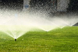Für Ihren Rasen kann ein Starter-Dünger im persönlichen Test das Richtige sein, wenn er einen hohen Anteil Kalium enthält.