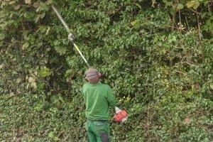 Hochentaster und Heckenschere sind im Test in Ihrem Garten in Kombination einsetzbar.