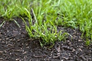 Bester Rasensamen? Wer Ihr Testsieger wird, sollte von der Lage und der Nutzung des Rasens abhängen.