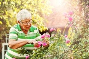 Die beste Gartenschere lässt sich vielseitig im Garten einsetzen – anders als beispielsweise eine Heckenschere.