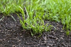 Bester Bodenaktivator gesucht? Ihren persönlichen Testsieger müssen Sie auf Ihren Gartenboden abstimmen.