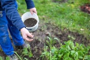 Wie können Sie den Bodenaktivator für Ihren Rasen im eigenen Test ausprobieren?