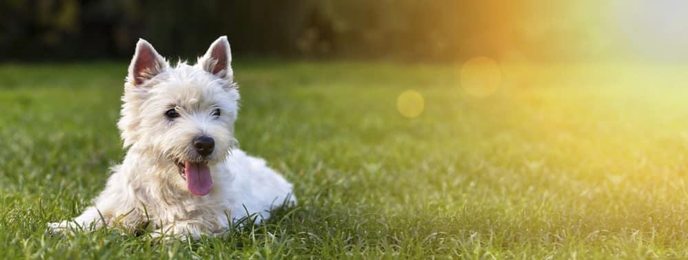 Berücksichtigen Sie in Ihrem Bodenaktivator-Test, ob vielleicht Tiere oder Kinder auf dem Rasen spielen.
