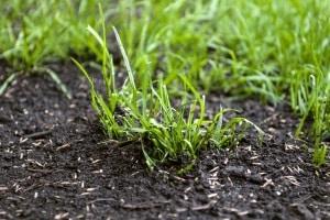 Selbst der beste Vertikutierer schadet dem Rasen, wenn er nicht richtig verwendet wird.