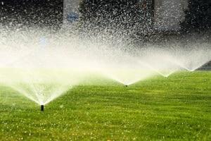 Erst bearbeiten Sie den Garten mit dem Rasenmäher, dann mit dem Vertikutierer. Nach Ihrem Test sollten Sie den Rasen ggf. bewässern.