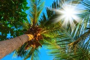 Sie möchten eine mit Solar betriebene Gartendusche kaufen? Ihr Testsieger sollte schwarz sein, um Sonnenwärme zu speichern.