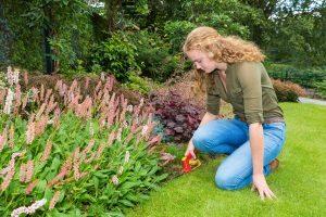 Suchen Sie für einen Praxis-Test ein Grasscheren-Set oder eine einzelne Schere, sind einige Kriterien zu beachten.
