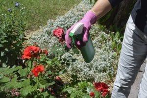 Unkrautvernichter im Rasen: Ihr Test sollte auch selbstgemachte Hausmittel in Erwägung ziehen (z. B. eine Essig-Salz-Lösung).