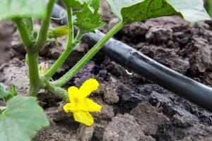 Bester Perlschlauch? Das ist ein Modell, das Ihre Pflanzen kontinuierlich mit der richtigen Menge Wasser versorgt.
