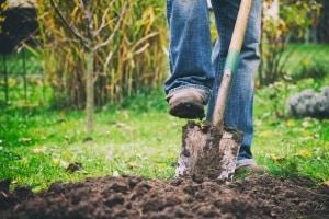 Ein Rasenkantenstecher kann im Vergleich zu einem Spaten deutlich genauere Rasenkanten hervorbringen.