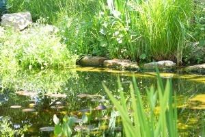 Bester Algenentferner: Für Teiche sollten Sie am besten auf biologische Reiniger zurückgreifen.