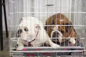 Auch eine Alu-Hundetransportbox ist faltbar. In Ihrem Test werden Sie jedoch feststellen, dass sie sich besser für den Autotransport eignet.