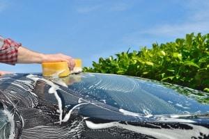 Insektenentferner: Im eigenen Test haben Sie die Wahl zwischen Produkten auf Wasser- und Gelbasis.